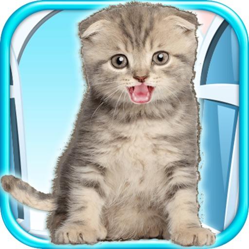 Talking Kitten - Play Time & Fun Games FREE