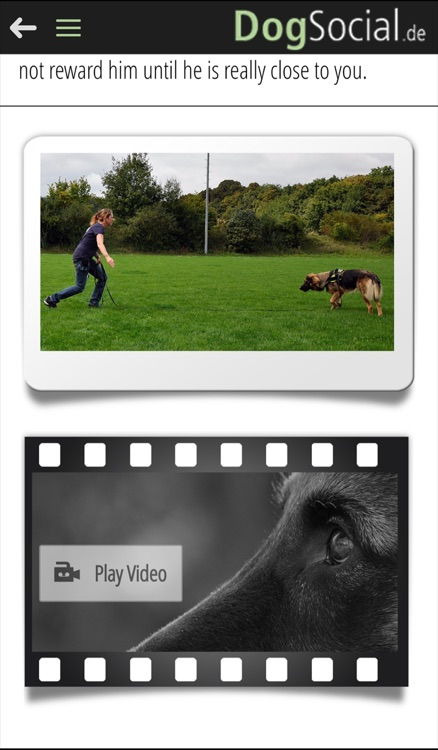 DogSocial Dog Training - Teaching the Basic Commands screenshot-2
