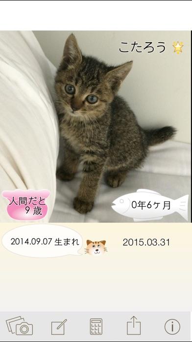 ニャンコいくつ?愛猫の年齢を計算して写真で保存!紹介画像4