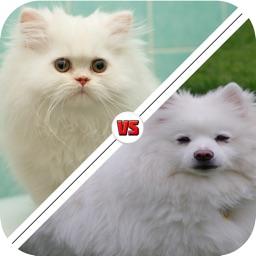 Tic Toc: Dog or Cat