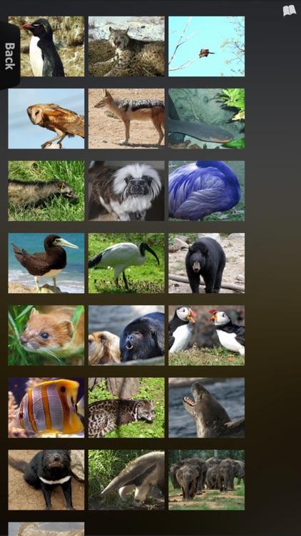 Animal Kingdom Guide