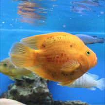 Fish Guide Pro