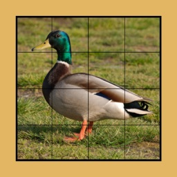 Duck Puzzles Extreme!