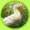 pictures of farm animals to win - free game