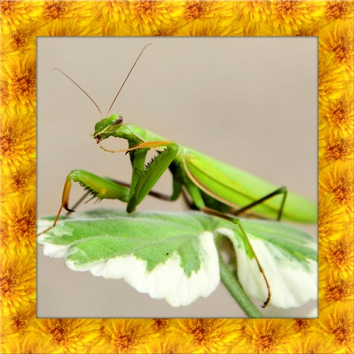 Praying Mantis Simulator