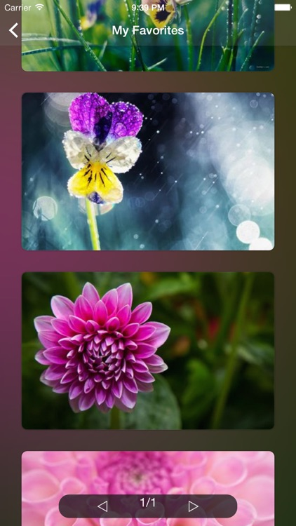 Flower WP Pro ~Extremely HD Flowers Wallpaper Image Gallery