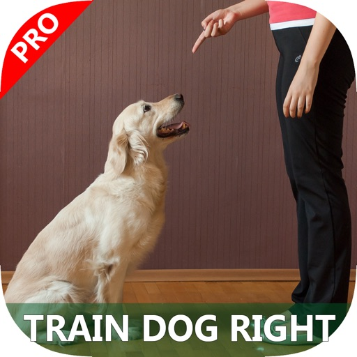 A+ How To Train Dogs - Teach Your Dog How To Potty, Crate, Tricks, Tips & More.