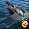 子供無料ジグソーパズル不思議コレクションのサメのパズル - iPhoneアプリ
