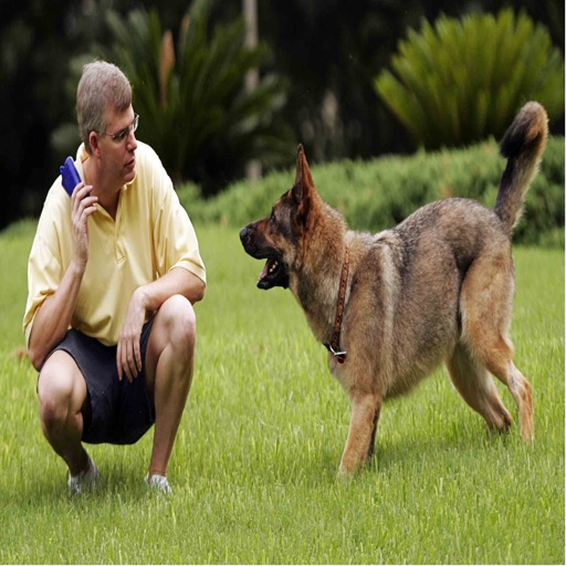 Dog Training Video Guide