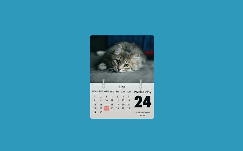 Cal Cat