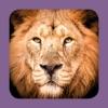 Sasol Soogdiere vir Beginners (Lite): Blitsfeite, foto's en video's van 46 Suider-Afrikaanse diere - iPhoneアプリ