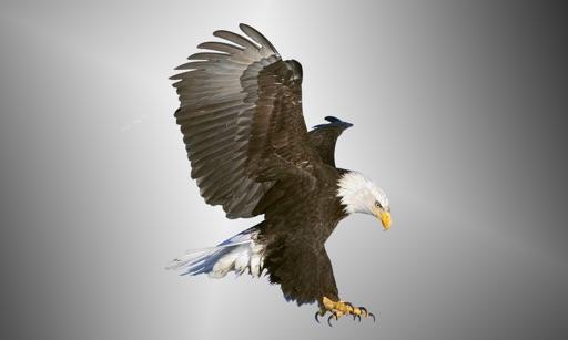 Birds Master icon