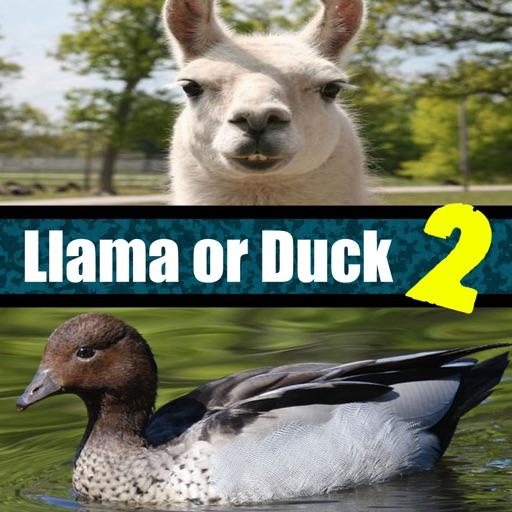 Llama or Duck Quiz 2
