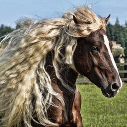 Horse Bible