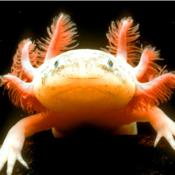Weirdest Sea Creatures app review