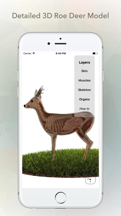 Deer Anatomy screenshot one