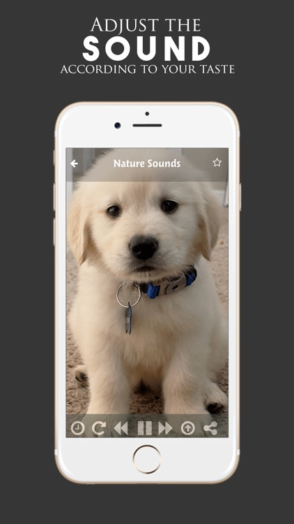 Puppy Sounds:Calming Music For Relaxation & Sleep screenshot-3