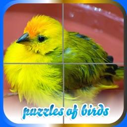 Puzzles of Birds