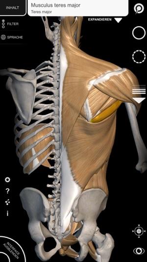 3D-Anatomie für den Künstler | v. 1.2 im App Store