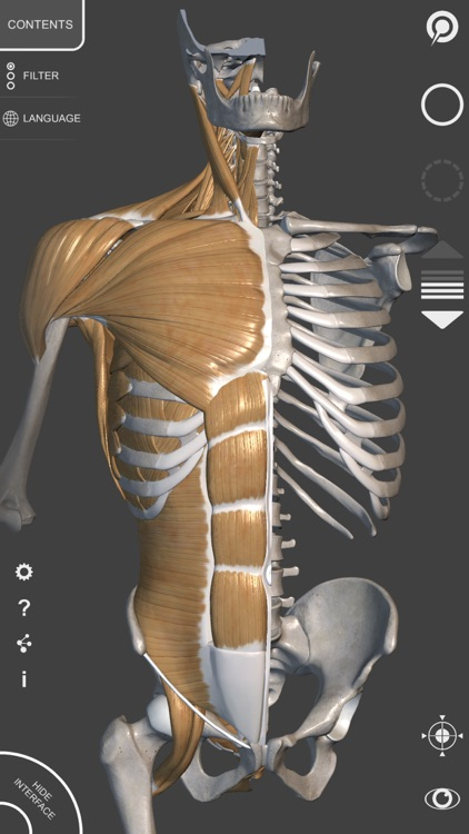3D Anatomy for the Artist | v. 1.2