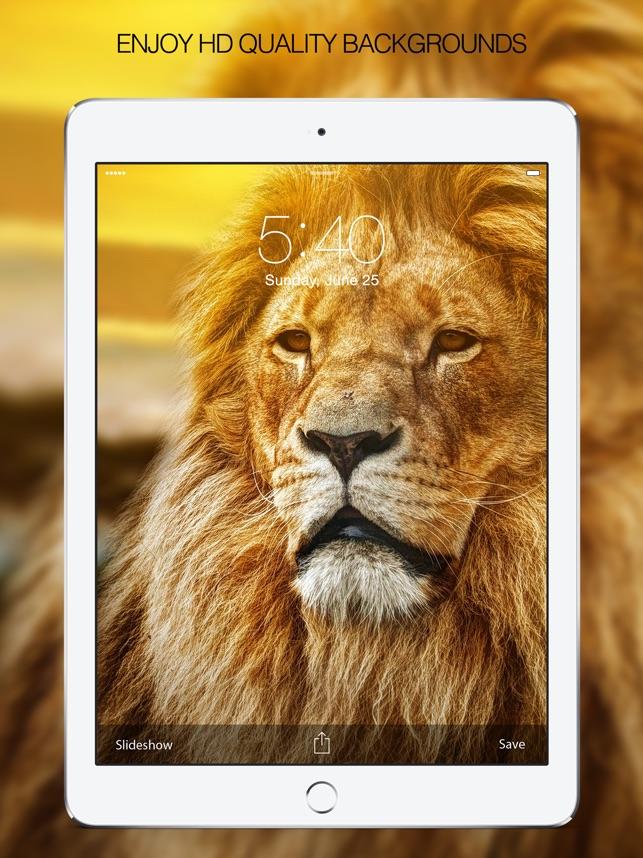 HD Wallpapers & HD Backgrounds Screenshot
