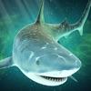 疯狂 海洋 饥饿 鲨鱼 来了!