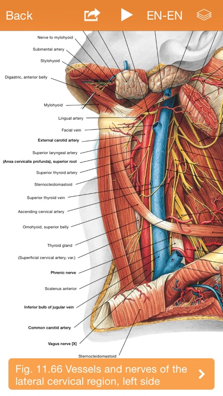 Sobotta Anatomy Atlas - Online Game Hack and Cheat | Gehack com