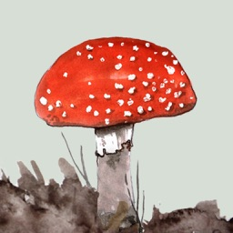 Mushrooms & Toadstools UK - An iSpiny Guide