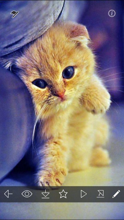 Cute Kitty Wallpapers HD - Cat & Kitten Pictures
