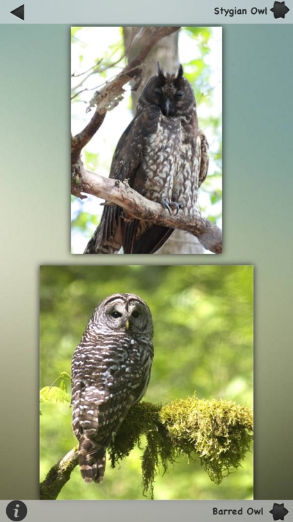 Owls Encyclopedia