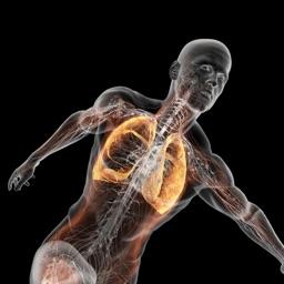 Fundamental of Anatomy and Physiology