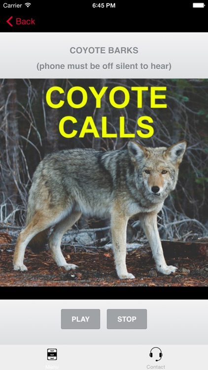 Coyote Calls for Predator Hunting Coyote