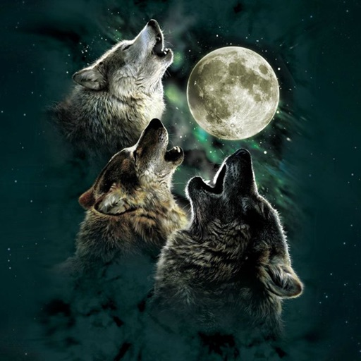 Wolf Howling Wallpapers HD: Quotes,Art Pictures icon