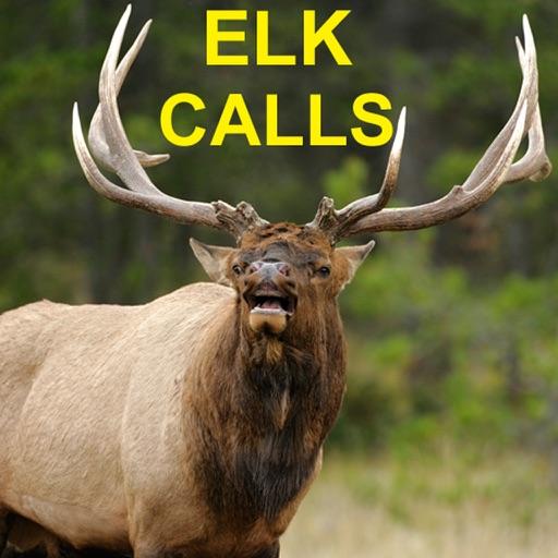 Elk Bugle & Elk Calls