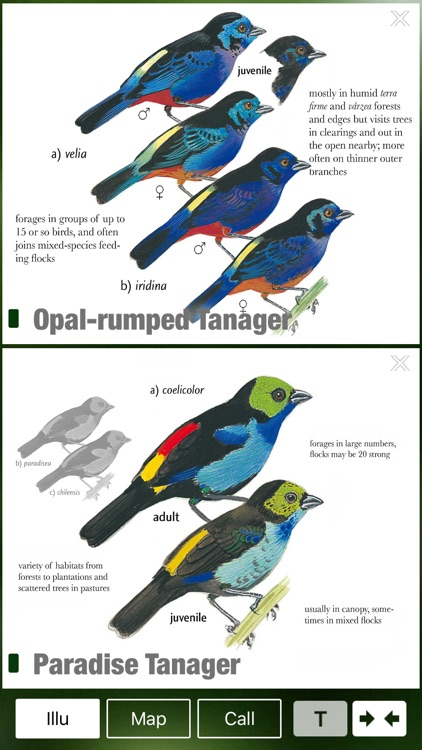 All Birds Northern Brazil - a field guide to all the bird species recorded in this region of South America screenshot-3