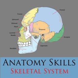 Learn the Bones of the Body