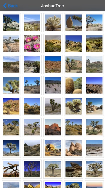 Joshua Tree National Park - USA screenshot-4