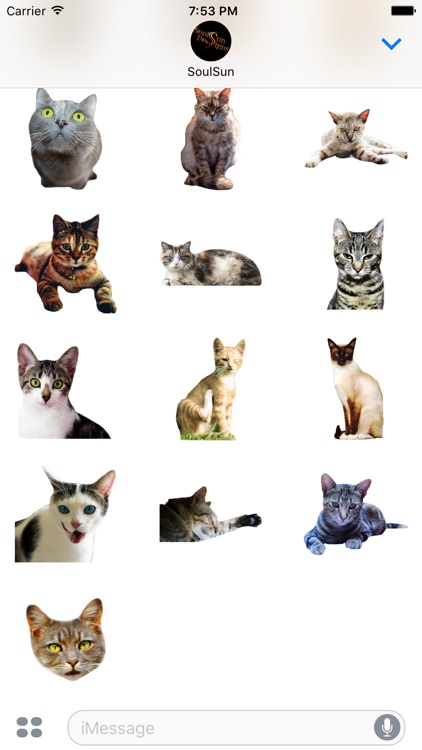 Cute Kitty Cats screenshot-4
