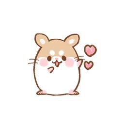 Fluffy Roborovskii hamster