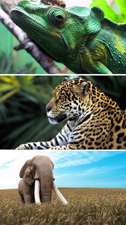 Wildlife Animals Wallpapers, Safari & Zoo Pictures screenshot-3