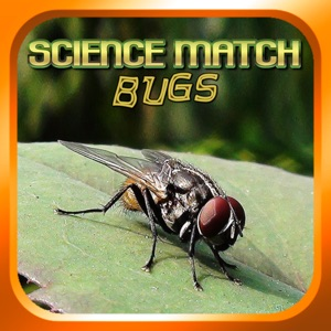 Science Match Bugs