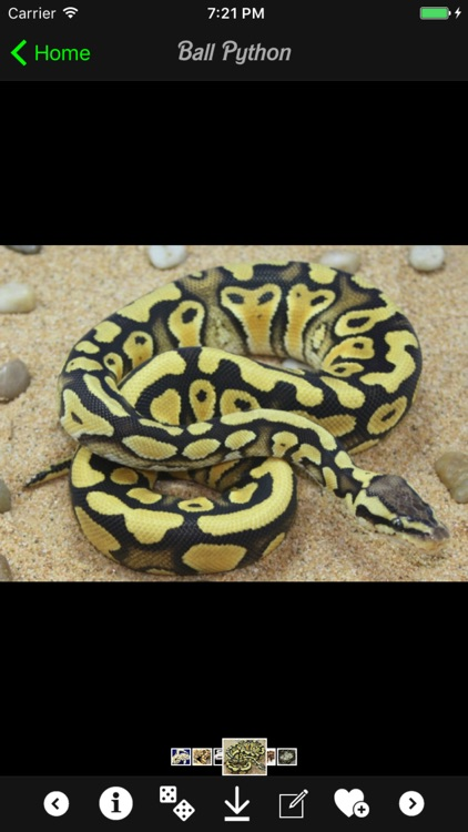 Snakes Wiki screenshot-4