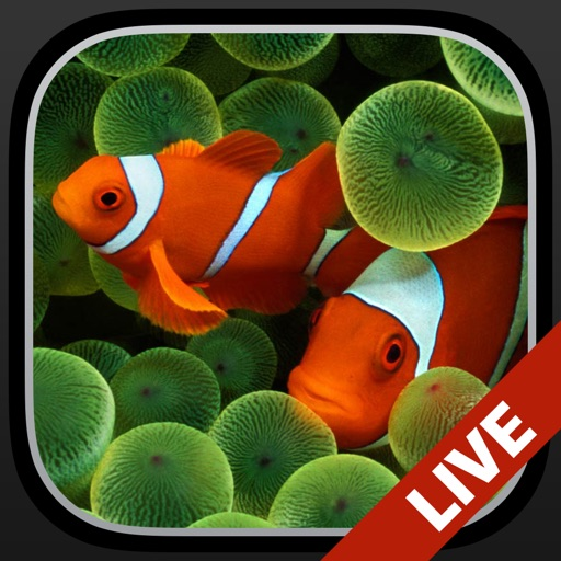 Aquarium Live Wallpapers for Lock Screen: Animated backgrounds for iPhone