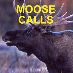 Moose Calls for Moose Hunting