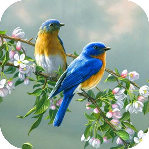 Birds Wallpaper & Singing Birds Background Sound