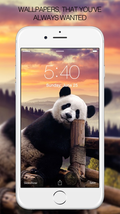 Panda Wallpapers – Panda Pictures & Panda Images