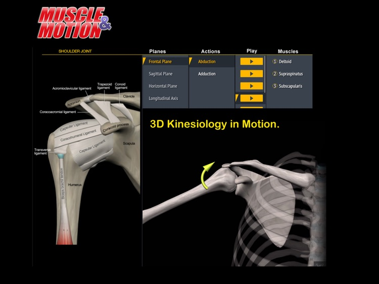 Muscle and Motion Anatomy screenshot-3
