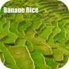 Banaue Rice Terraces Philippines Tourist Guide