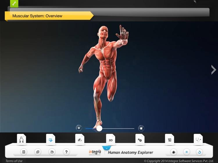 Human Anatomy Explorer - Muscular System