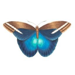 Butterflies Variety Pack